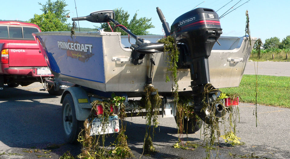 Example of boat with invasive species